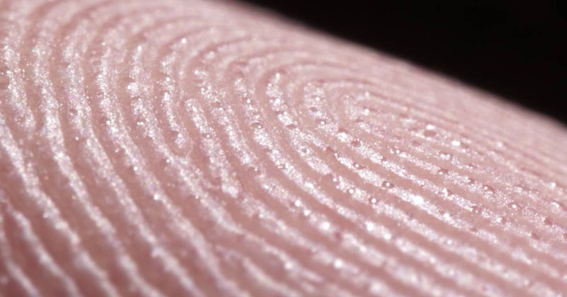 Macro Timelapse Reveals the Hundreds of Sweat Glands on the Tip of Your Finger Alone