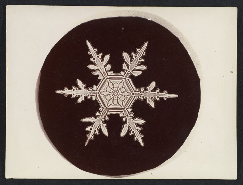 first ever photos of snowflakes by wilson alwyn bentley 13 In 1885 Wilson Bentley Took the First Ever Photographs of Snowflakes (23 Photos)