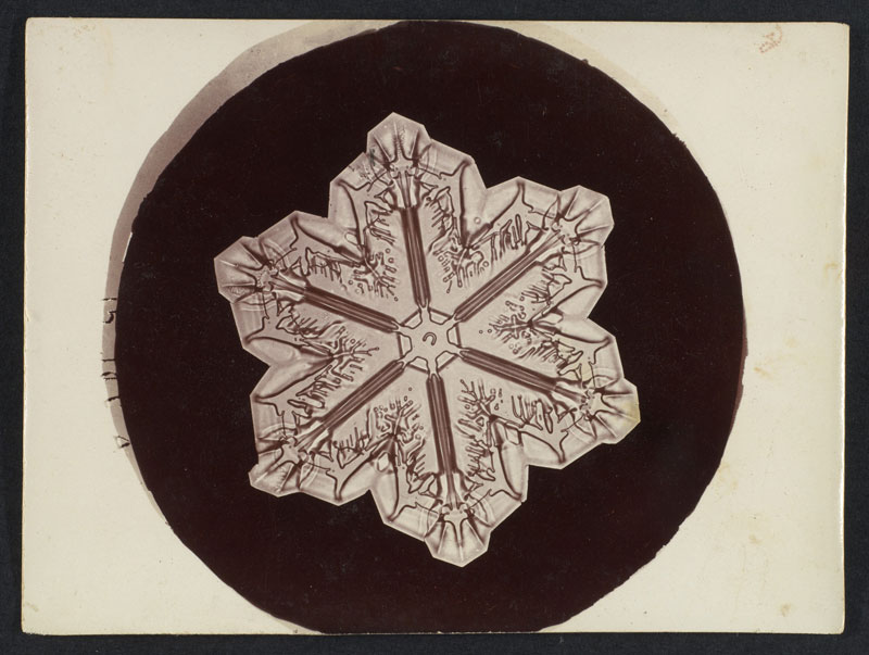 first ever photos of snowflakes by wilson alwyn bentley 4 In 1885 Wilson Bentley Took the First Ever Photographs of Snowflakes (23 Photos)