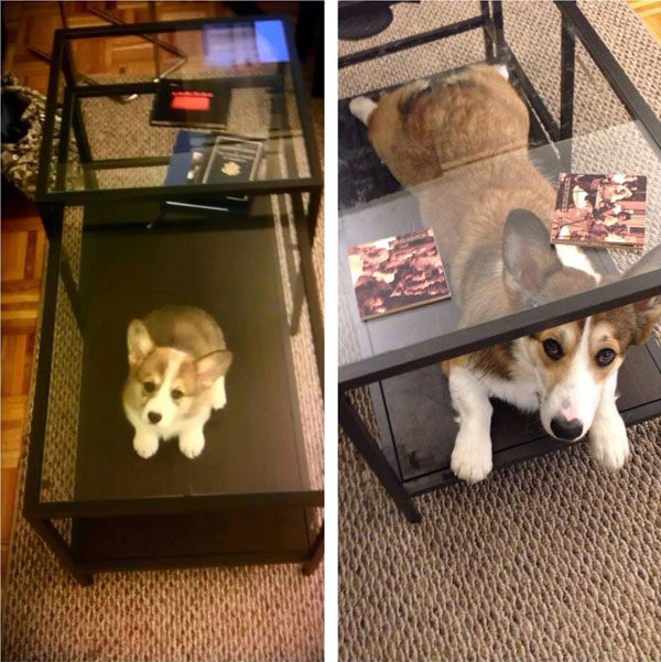 puppies dogs then and now 1 18 Then and Now Photos of Puppies/Dogs That Will Restore Your Faith in Everything