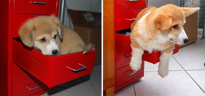 puppies dogs then and now 11 18 Then and Now Photos of Puppies/Dogs That Will Restore Your Faith in Everything