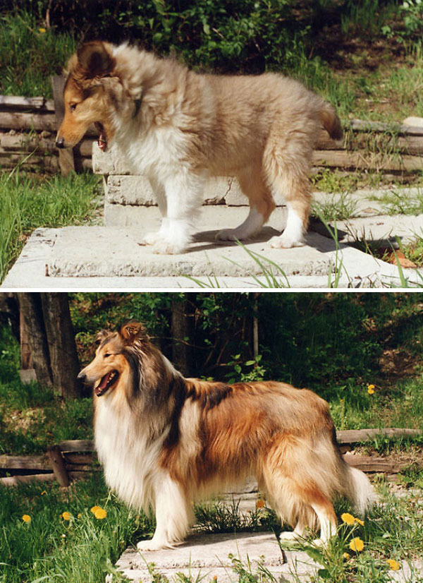 puppies dogs then and now 13 18 Then and Now Photos of Puppies/Dogs That Will Restore Your Faith in Everything