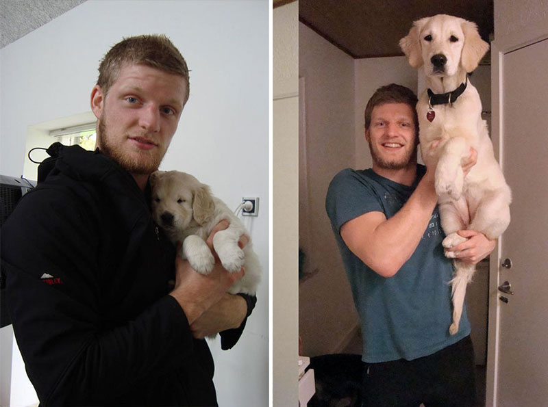 puppies dogs then and now 15 18 Then and Now Photos of Puppies/Dogs That Will Restore Your Faith in Everything