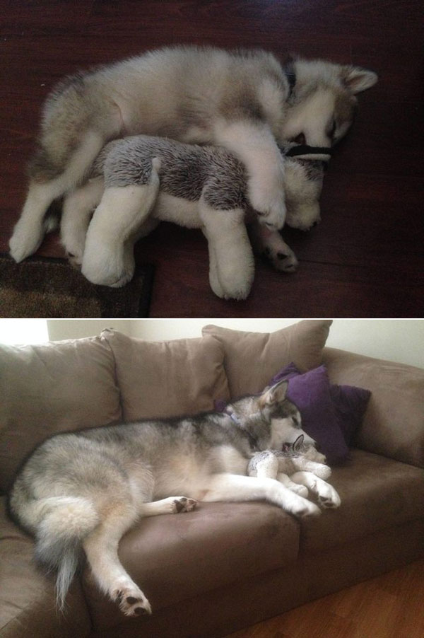 puppies dogs then and now 18 18 Then and Now Photos of Puppies/Dogs That Will Restore Your Faith in Everything