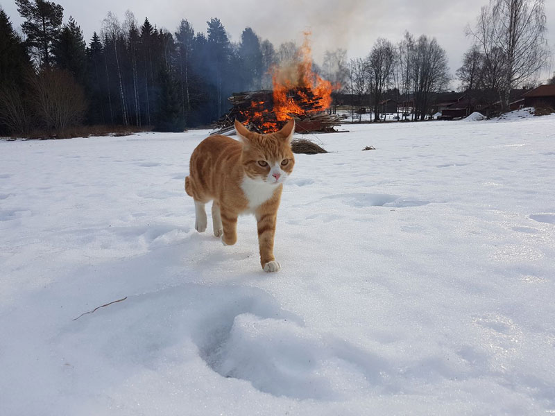 cat walking away from fire Picture of the Day: Villain Cat