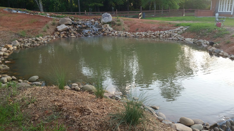 instead of an in ground swimming pool this guy built his own natural swim pond 23 Forget an In Ground Swimming Pool, this Guy Built His Own Natural Swim Pond!