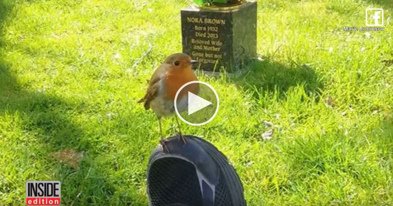 mom brought to tears when wild bird comforts her while