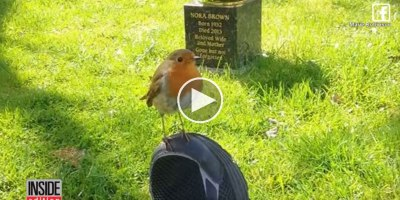 Mom Brought to Tears When Wild Bird Comforts Her While Visiting Son'sGrave