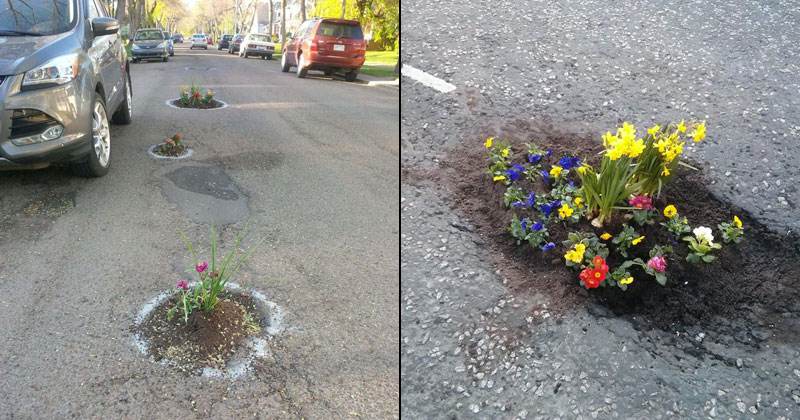 TwistedSifter & People are Planting Flowers in Potholes Because Cities Aren ...