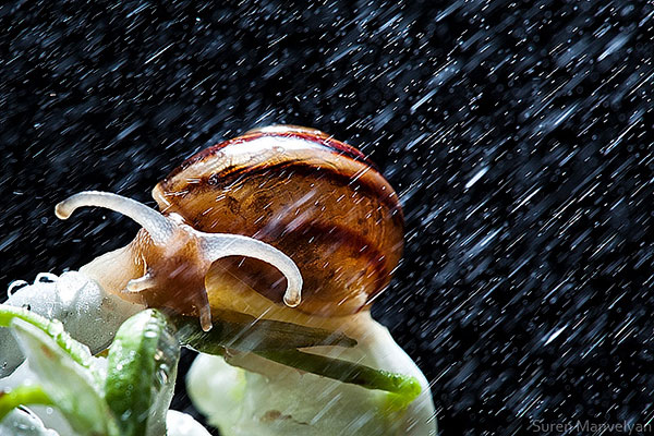 snails caught in rainstorm by suren manvelyan 2 These Close Ups of Snails in a Rainstorm are Beautiful