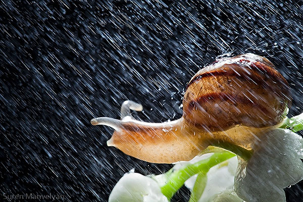 snails caught in rainstorm by suren manvelyan 3 These Close Ups of Snails in a Rainstorm are Beautiful