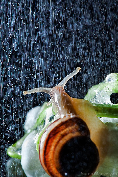 snails caught in rainstorm by suren manvelyan 4 These Close Ups of Snails in a Rainstorm are Beautiful