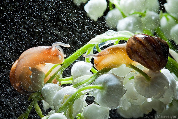 snails caught in rainstorm by suren manvelyan 5 These Close Ups of Snails in a Rainstorm are Beautiful