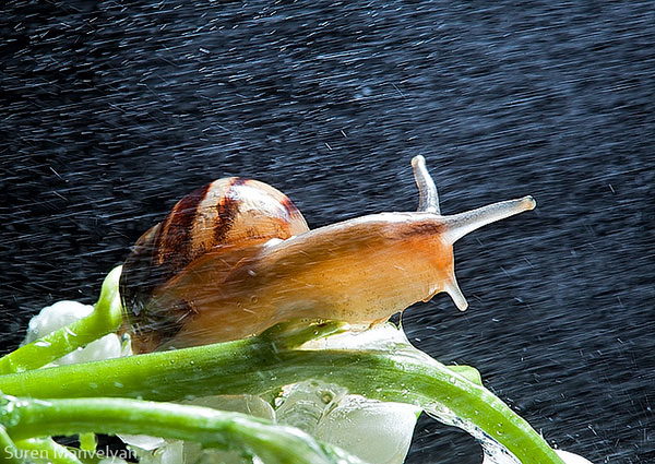 snails caught in rainstorm by suren manvelyan 7 These Close Ups of Snails in a Rainstorm are Beautiful
