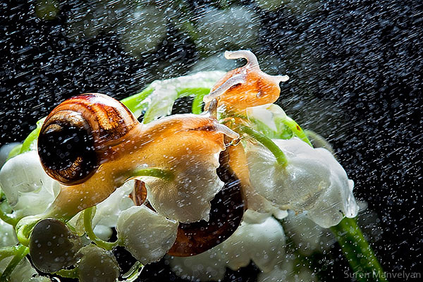 snails caught in rainstorm by suren manvelyan 8 These Close Ups of Snails in a Rainstorm are Beautiful