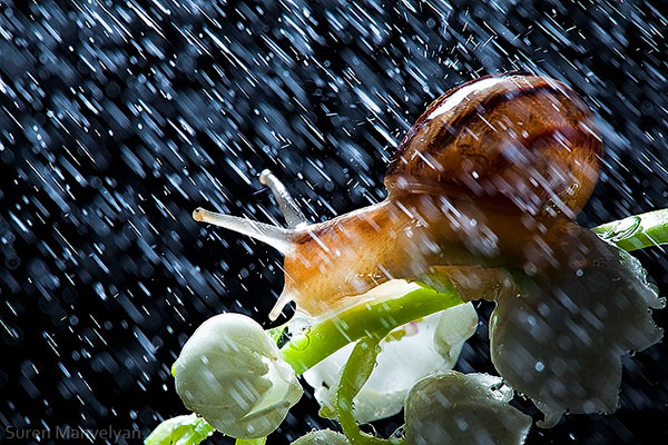 snails caught in rainstorm by suren manvelyan 9 These Close Ups of Snails in a Rainstorm are Beautiful