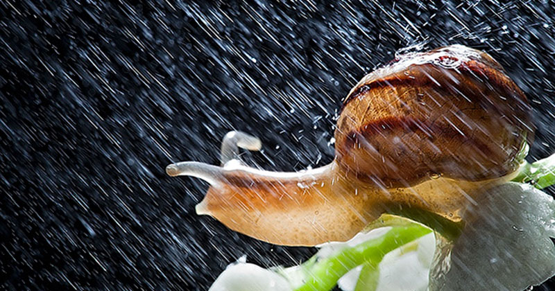 These Close-Ups of Snails in a Rainstorm are Beautiful
