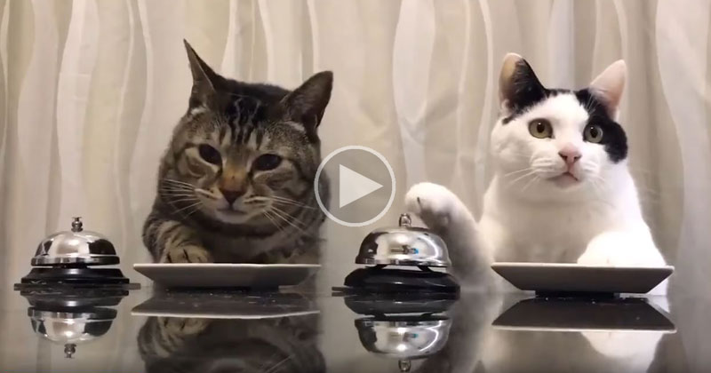 Just Two Cats Politely Ringing a Bell forFood
