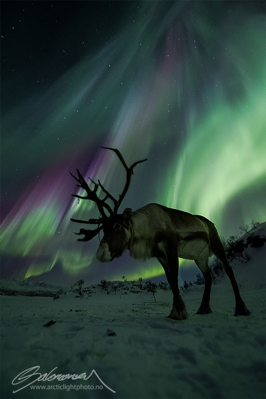 33 best auroras nasa has ever featured 15 The 33 Best Aurora Photos NASA Has Ever Featured