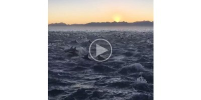 Just a Pod of 2,000 Dolphins Under a RisingSun
