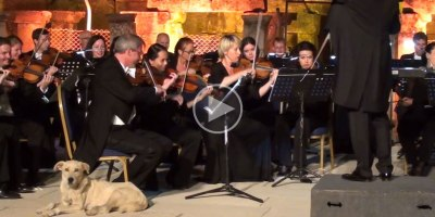 Dog Strolls Onto Stage During Orchestra Performance and Takes aNap