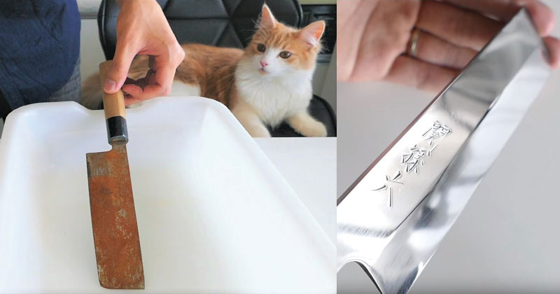 Mildly Impressed Kitty Watches Man Beautifully Restore Rusty Knife