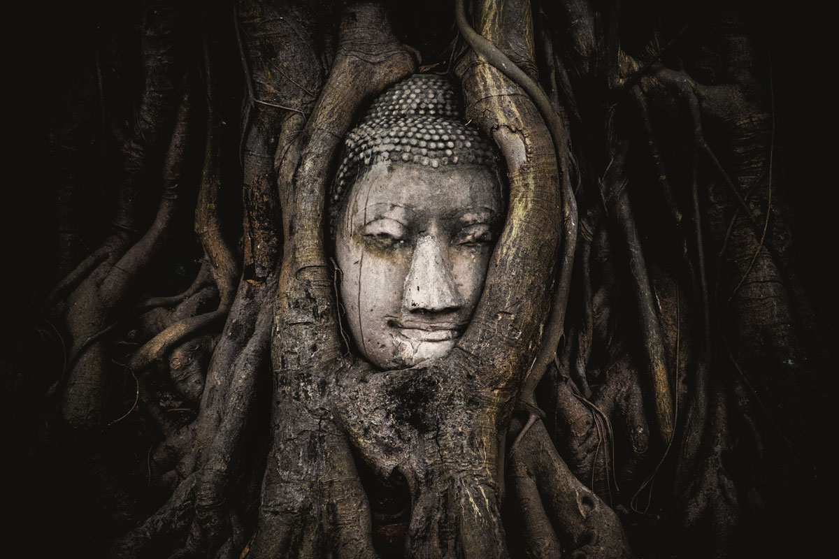 buddha statue covered by tree wat maha that phra nakhon si ayutthaya province thailand Picture of the Day: Religious Nature