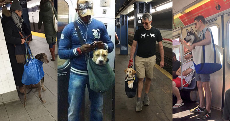 The MTA Banned Dogs on the Subway Unless They Fit in a Bag, but this is New York City