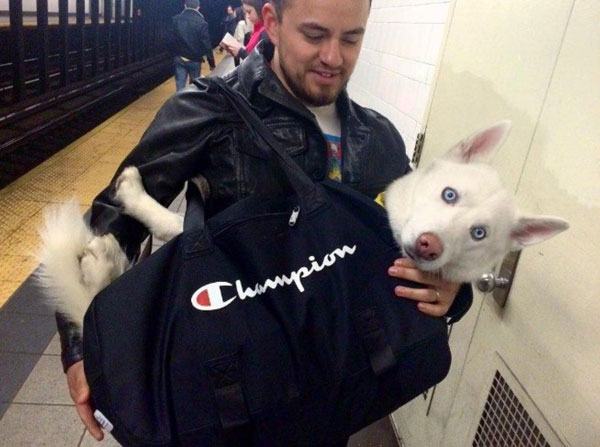 dogs in bags on new york city subway 4 The MTA Banned Dogs on the Subway Unless They Fit in a Bag, but this is New York City