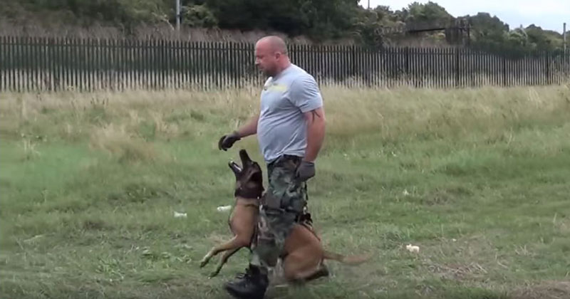 If You've Never Seen a Military Police Dog in Action Check Out this TrainingDemo