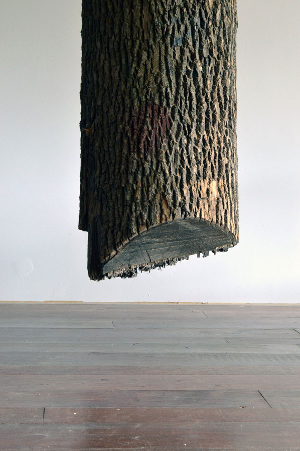 schrodingers wood by maskull lasserre 3 This Was Carved from a Single Ash Tree Trunk