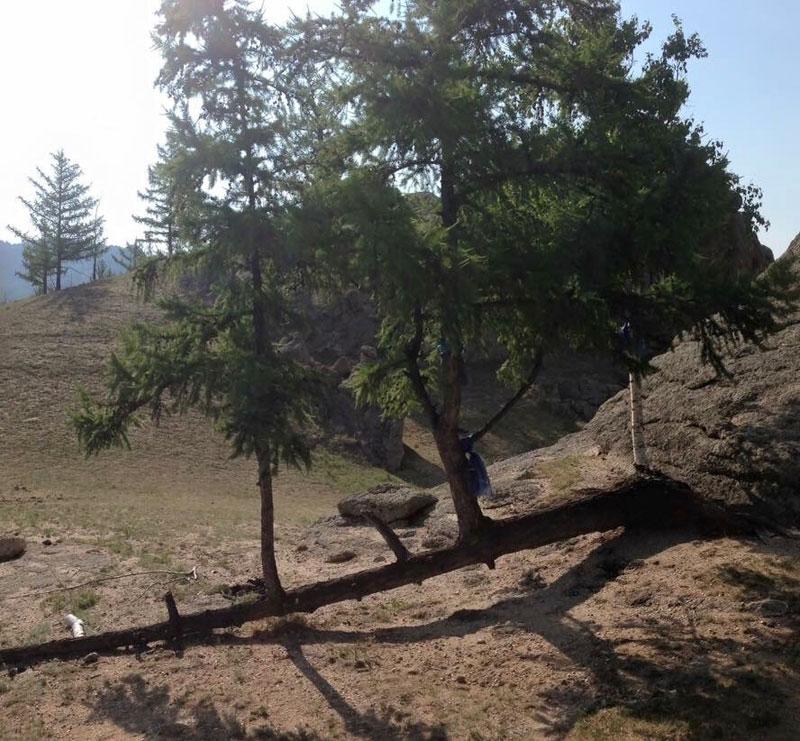 badass trees that refuse to die 2 10 Badass Trees That Refuse To Die