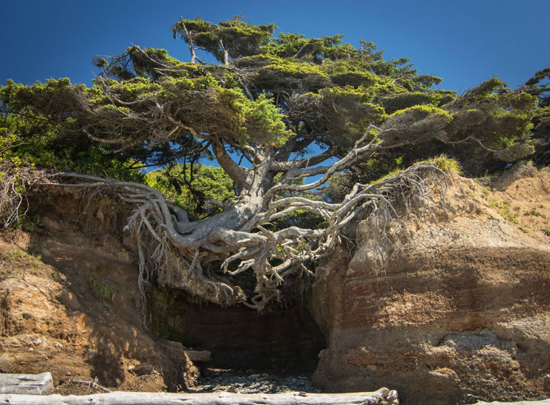 10 Badass Trees That Refuse ToDie