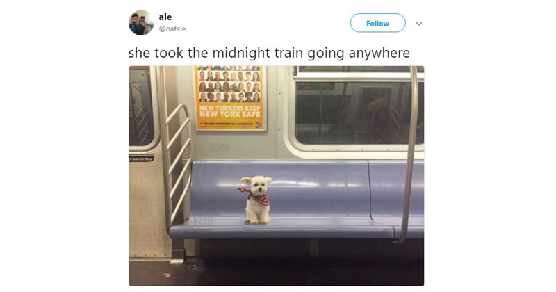 She Took The Midnight Train Dog