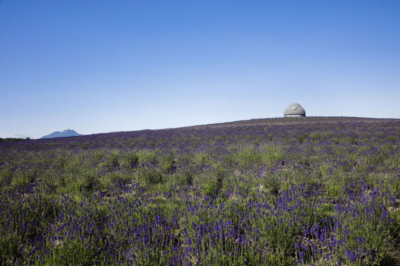 the hidden buddha surrounded by a hill of lavender 3 The Hidden Buddha Surrounded by a Hill of 150,000 Lavenders