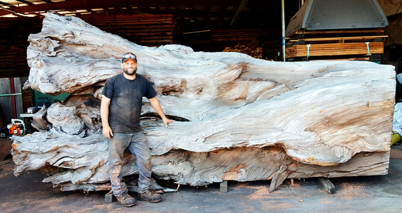 octopus carved from fallen redwood by jeffrey michael samudosky 2 Artist Transforms Fallen Redwood Into Giant Octopus (15 Photos)