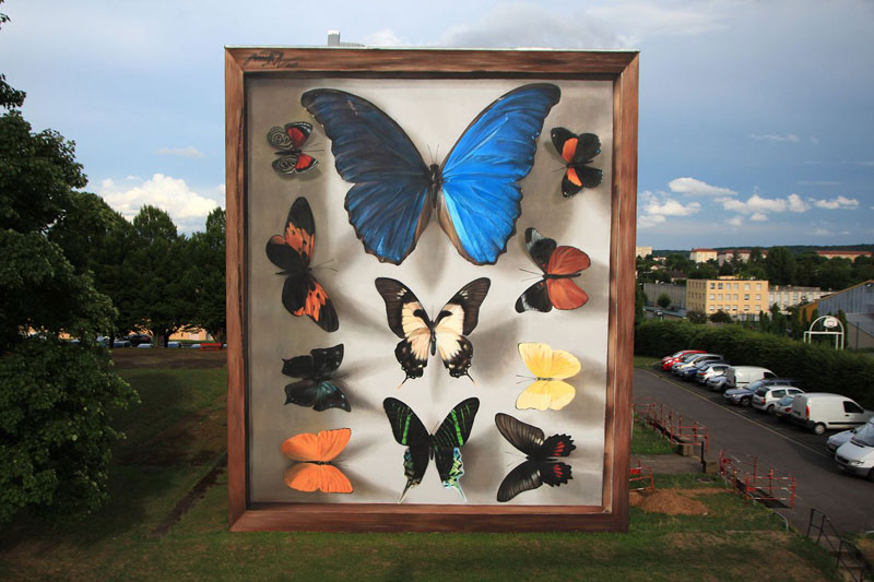 3d buterfly specimen boxes by mantra 1 Artist Transforms Walls Into Giant 3D Specimen Boxes for Butterflies