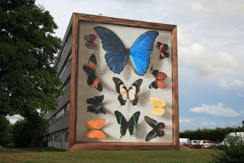 3d buterfly specimen boxes by mantra 2 Artist Transforms Walls Into Giant 3D Specimen Boxes for Butterflies