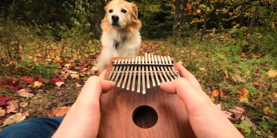 "Elvis Presley's ""Can't Help Falling In Love"" on a Kalimba is Chill"