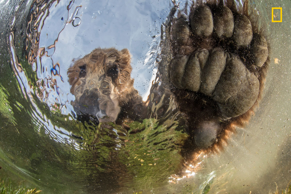 prod yourshot 376648 10997088 005 12 Amazing Highlights from the 2017 Nat Geo Nature Photographer of the Year Contest