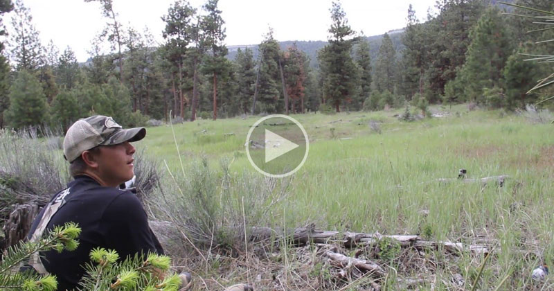 If You've Never Heard a Mountain Lion Scream it's Terrifying