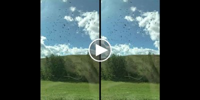 Guy Takes Slow Mo iPhone Vid of Passing Birds from a Train and It LooksSurreal