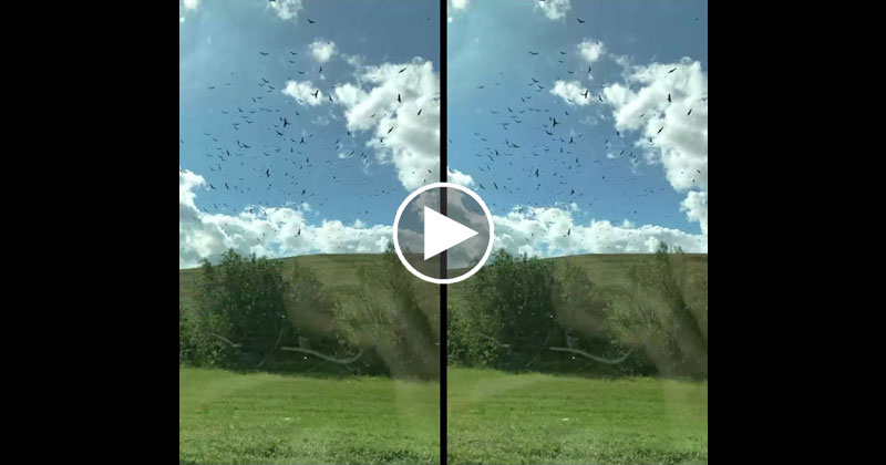 Guy Takes Slow Mo iPhone Vid of Passing Birds from a Train and It Looks Surreal