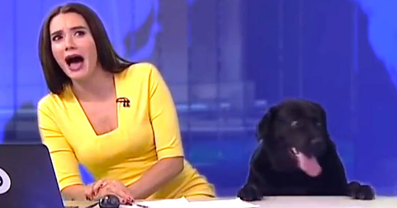 The Best News Bloopers of 2017 are Here and They'reGlorious