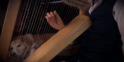 Carol of the Bells on a Harp + Bonus Dog Reaction for ExtraSoothingness