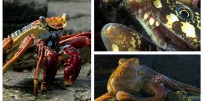 Crab vs Eel vs Octopus – Blue PlanetII