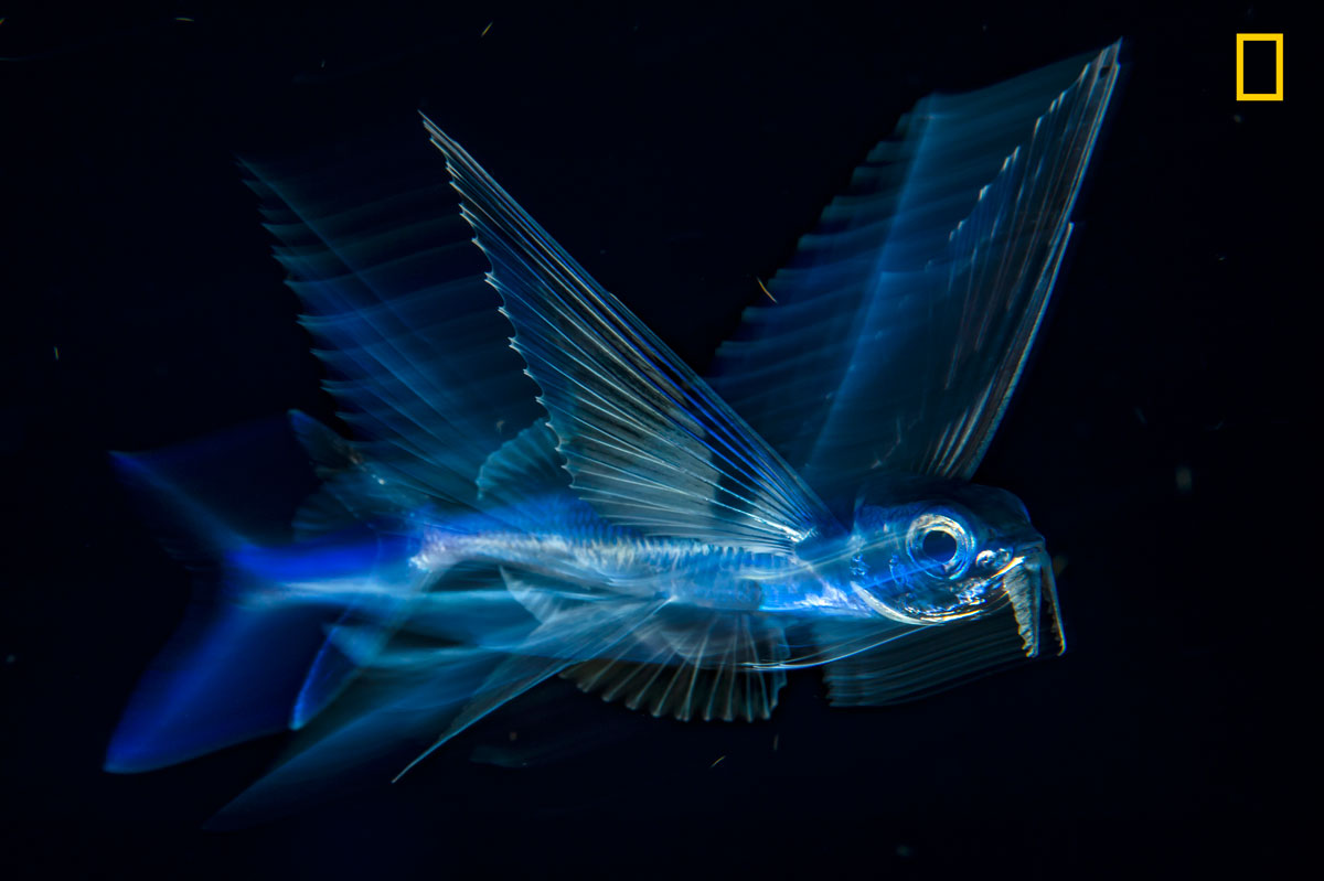 ngnp 3rdplace underwater The 2017 Nat Geo Nature Photographer of the Year Winners are Here and Amazing