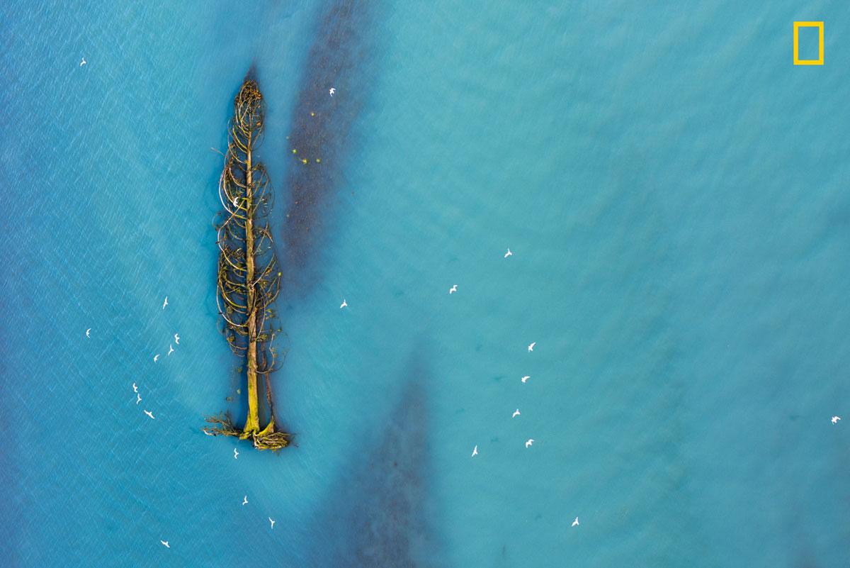 ngnp honmen1 aerials The 2017 Nat Geo Nature Photographer of the Year Winners are Here and Amazing