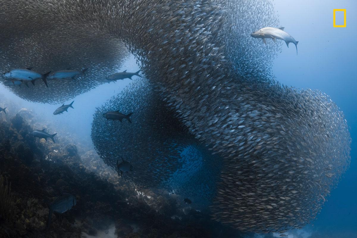 ngnp honmen1 underwater The 2017 Nat Geo Nature Photographer of the Year Winners are Here and Amazing