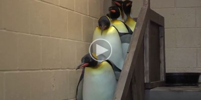 Adding the Imperial March to This Random Penguin Video was an Excellent Idea